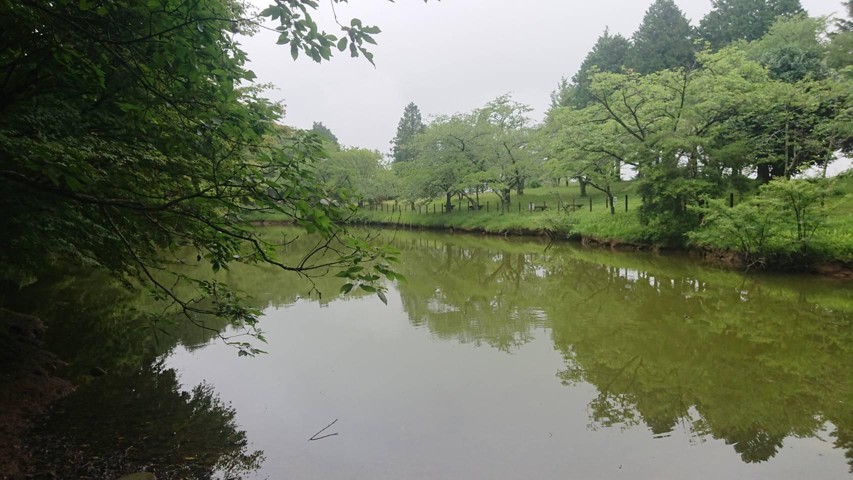 はたご池の水面