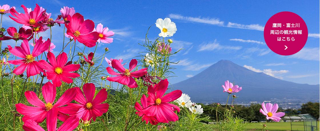 鷹岡・富士川周辺の観光情報はこちら